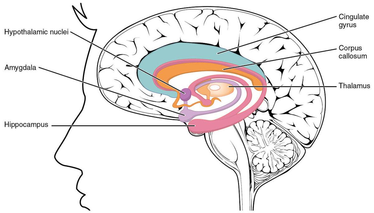 Amygdala aromatherapie