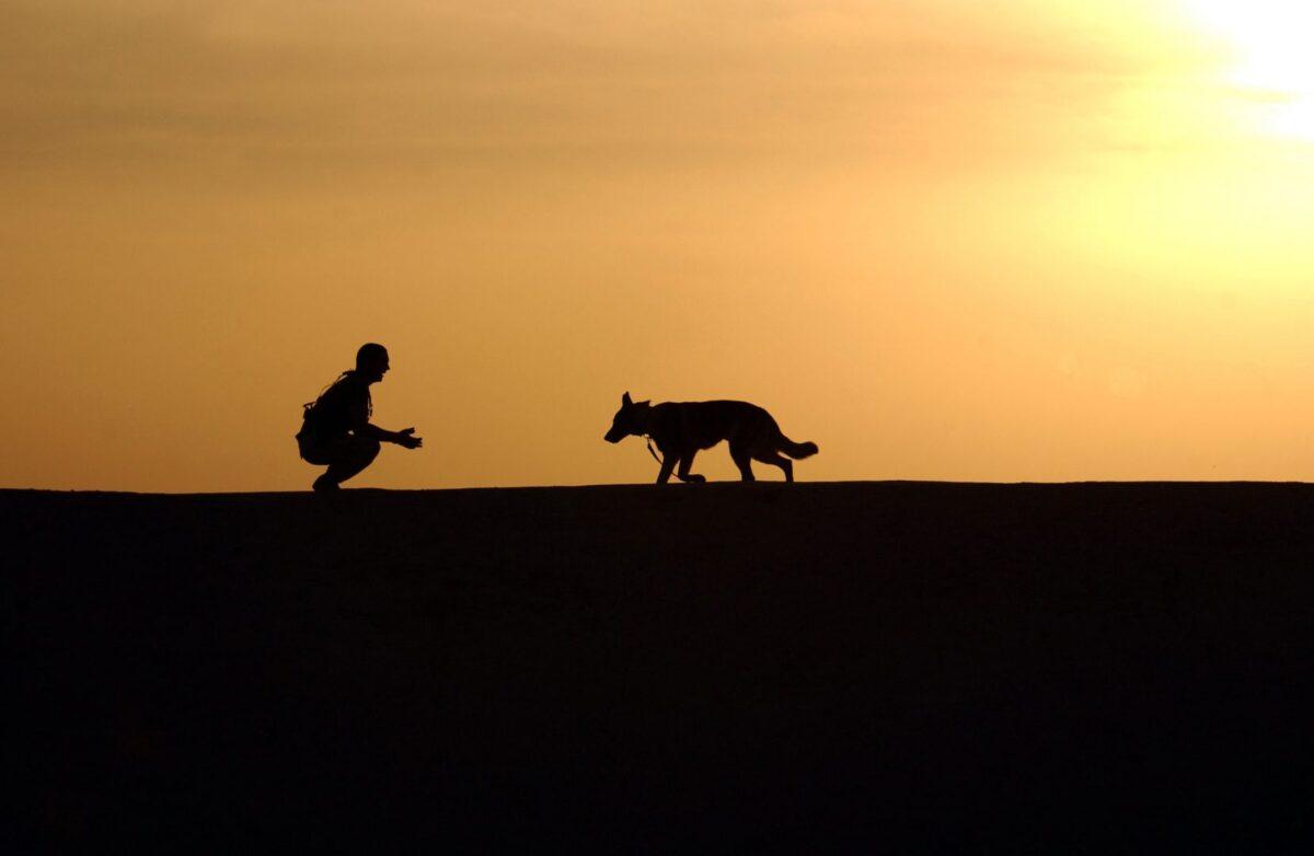 honden etherische olie