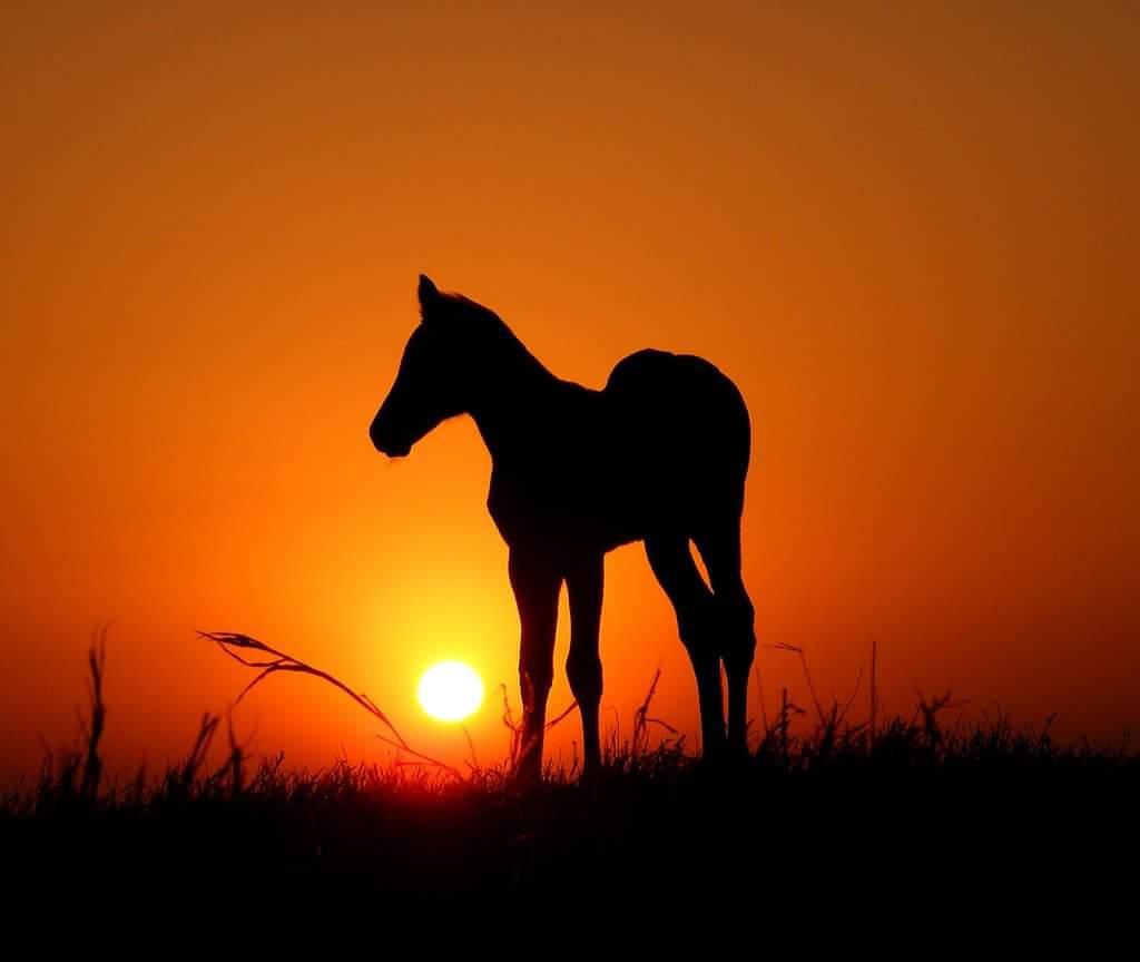 etherische olie recepten paarden